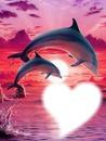 les dauphin