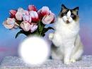 Chat avec un bouquet