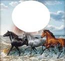 3 chevaux sur la plage 1 photo