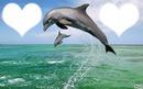 Cadre de dauphin